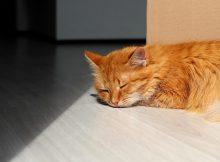 cat 4353616 1920