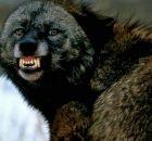 beshenstvo sobak animal reader.ru 003 1024x640 1