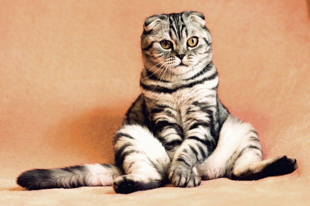 cat 2934720 1280