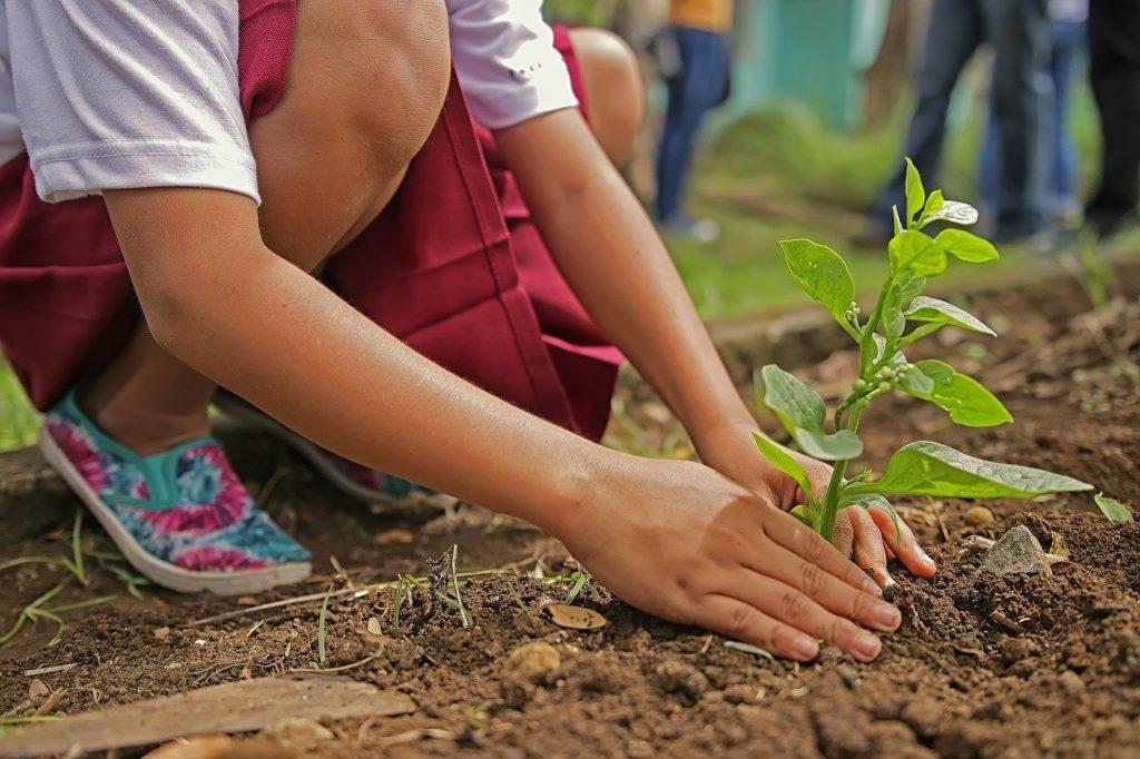 planting 1898946 1280