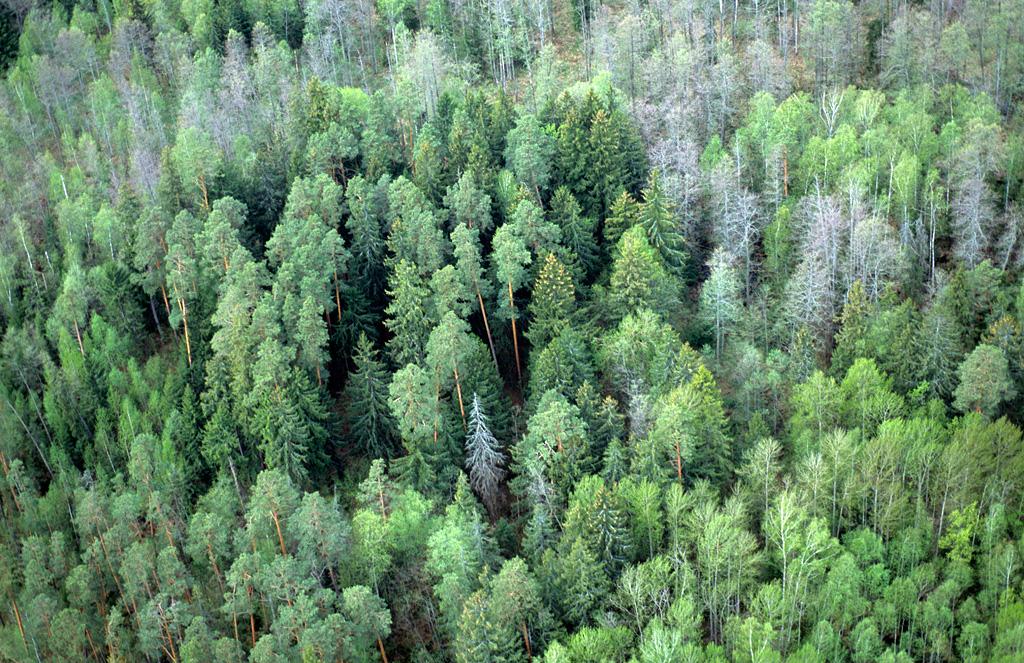 Bryanskij les 1