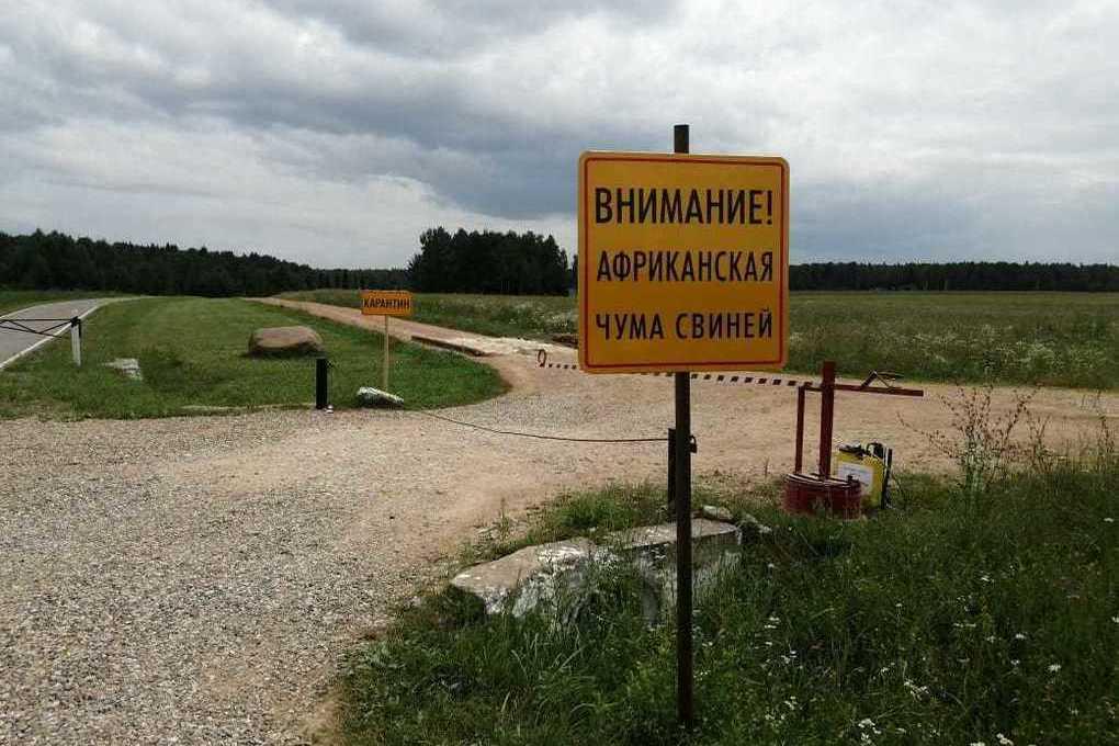 В Брянской области установили карантин по АЧС