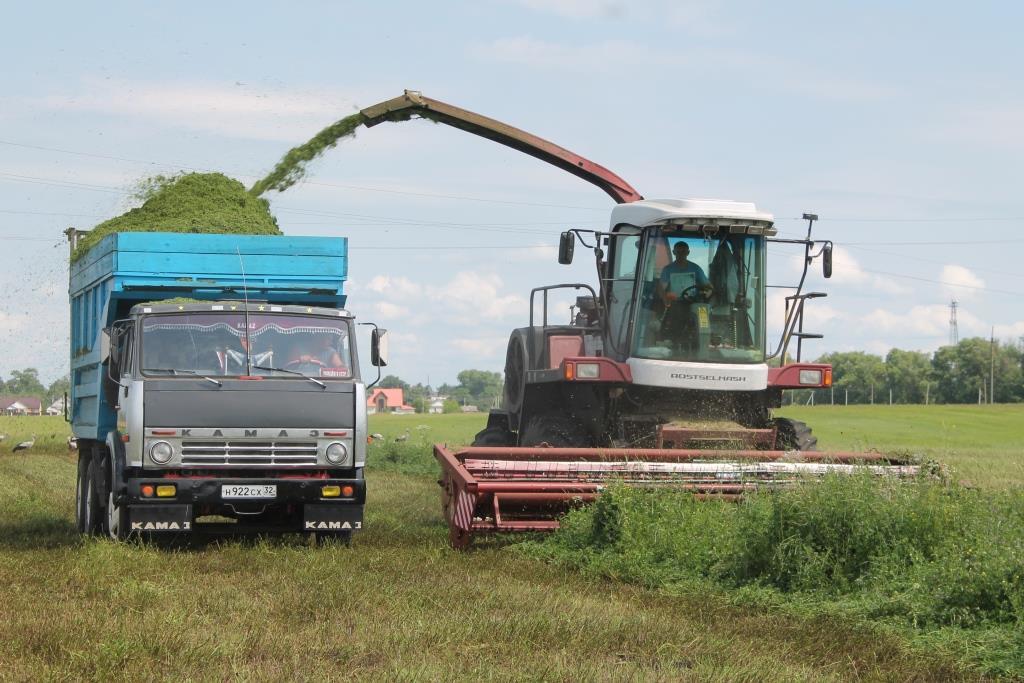 В Брянской области в достатке заготовили сенажа