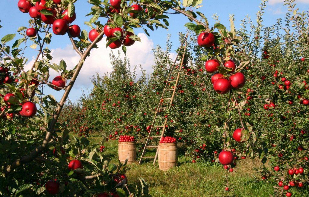 apples 1873078 1920
