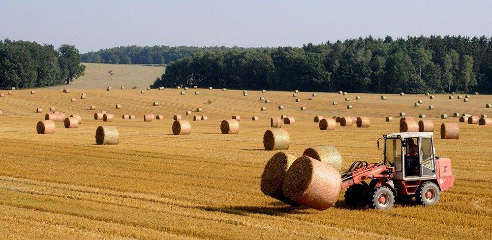 harvest 803479 1280