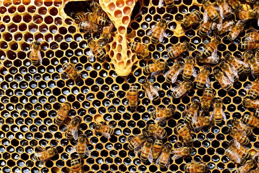 honey bees 337695 1920