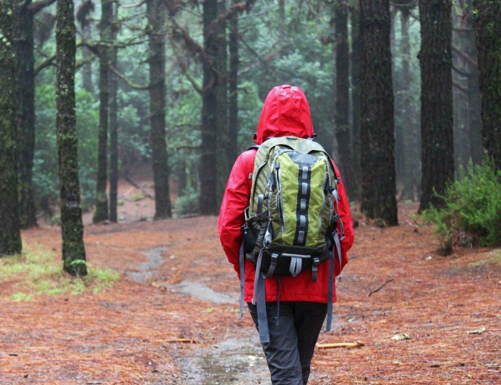Брянцам с 26 августа вновь разрешили ходить в лес
