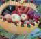 В Брянской области состоялись очередные овощные ярмарки