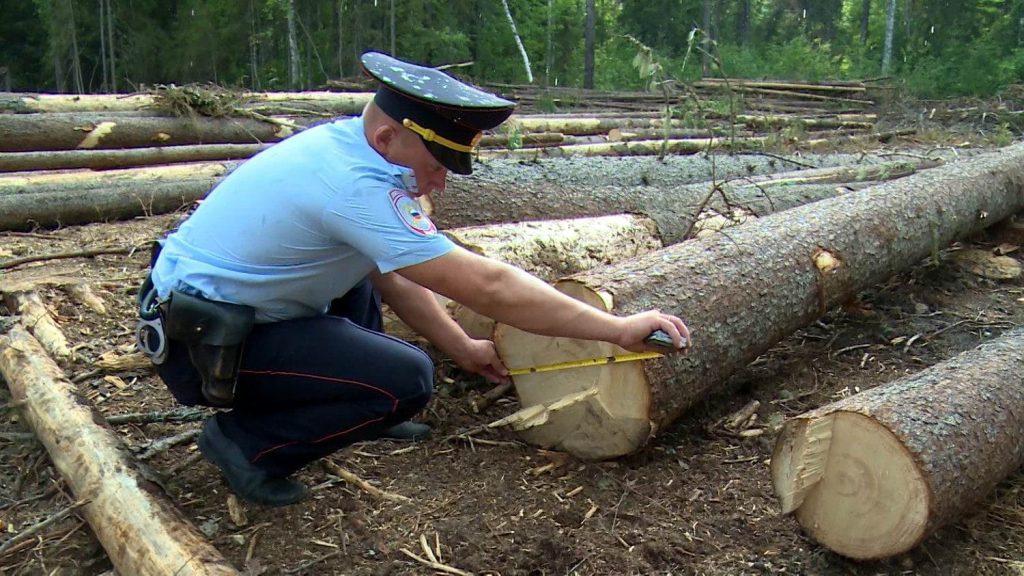 В Брянской области завели 18 уголовных дел за вырубку леса