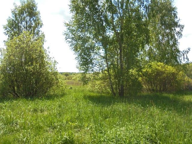 Москвича оштрафовали на 30 тысяч рублей за заросшие сорняком земли в Дубровском районе