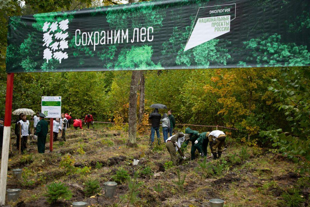 Более 100 саженцев высадили под Брянском в память о героях-партизанах
