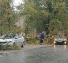 В Бежицком районе Брянска из-за сильного ветра дерево рухнуло на машины