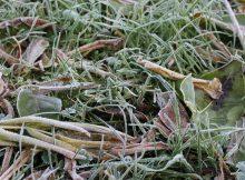 В Брянской области прогнозируют заморозки