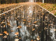 Брянцам обещают дождливое и холодное воскресенье с сильным ветром