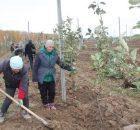 В Брасовском районе в 2 с лишним раза увеличили площади под яблоневый сад