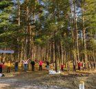 Брянцы просят спасти от вырубки сосновый бор на Володарке