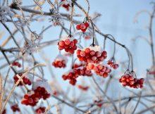 В Брянской области прогнозируют 5-градусный мороз