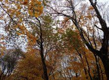 На Брянщине 21 октября ожидается сильный ветер и 18-градусное тепло